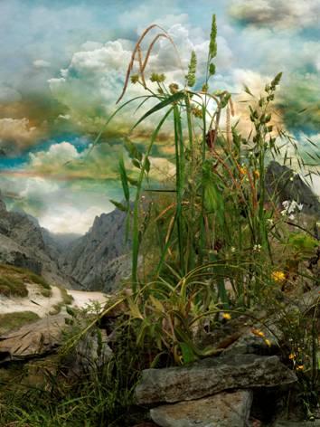 """""""Hierbas 7"""" Impresión Lambda. 90 x 67,5 cm Jose Ramon Ais"""